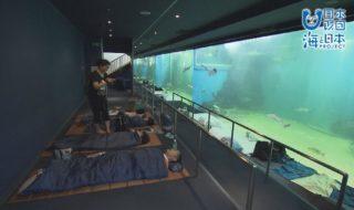オールナイト水族館