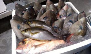 釣った魚3