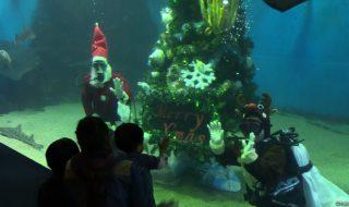 松島クリスマス