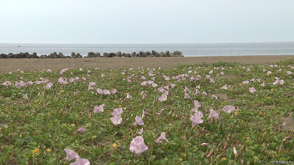 海と日本PROJECT in ふくい